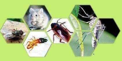 饭堂灭鼠、灭蟑、灭蝇制度及操作规范